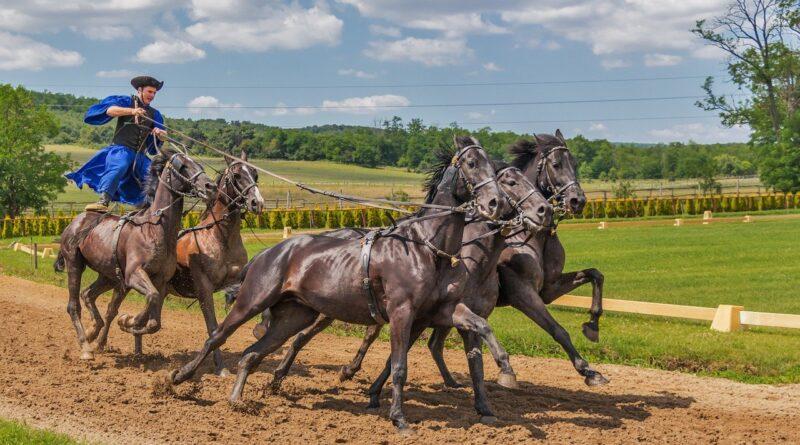 La equino terapia y la salud por un caballo